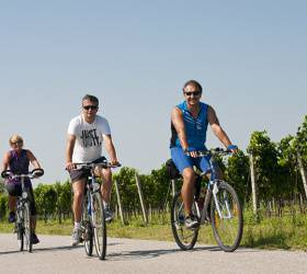 bikever bike rental hiring home france enjoy journey travel bike nature vineyard ride