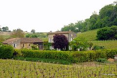 bikever location velo regions sud ouest lieux villes insolite paysage vin vignoble cep saint emilion