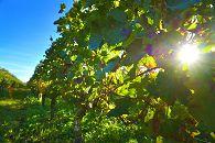 bikever location velo regions sud ouest culture terroir table gastronomie vin bordeaux